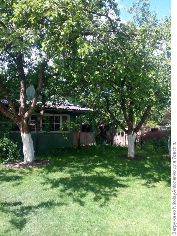 лужайка перед летним домиком на фоне соседского участка
