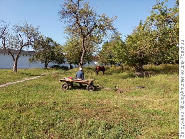 Цыган, телега и распряжённая лошадь в монастырском саду.