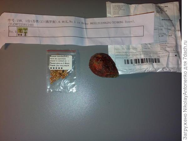 орех Цикаса и пакетик с семенами, написано Роза (post Malasia Internetional Hub)