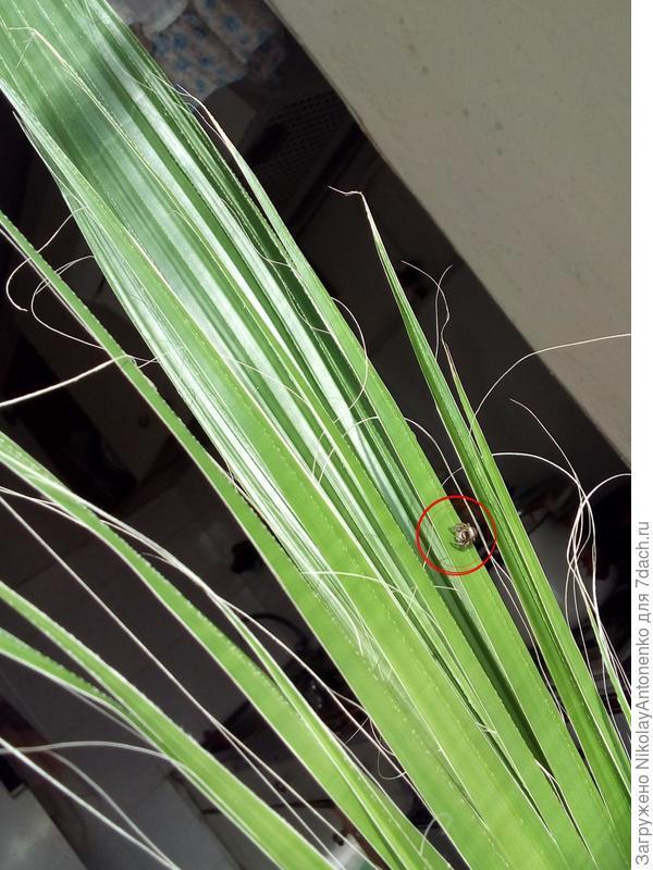 паук на пальме