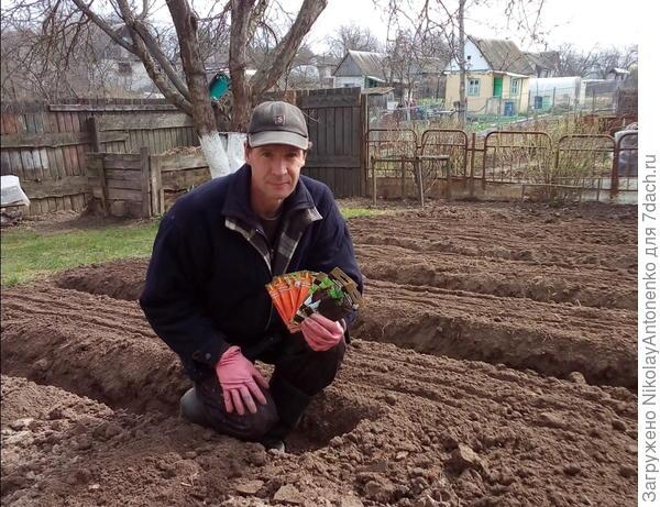 портрет с семенами свеклы и моркови на фоне вскопанных грядок
