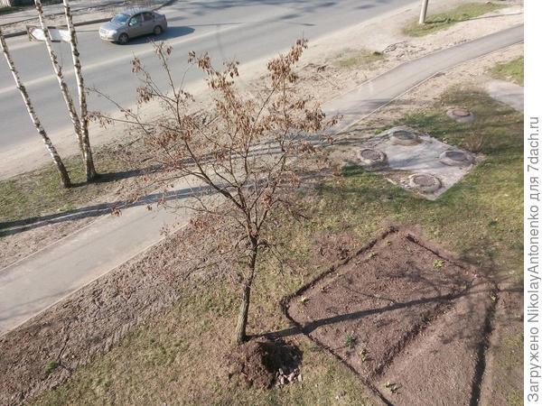 куча мусора под деревом