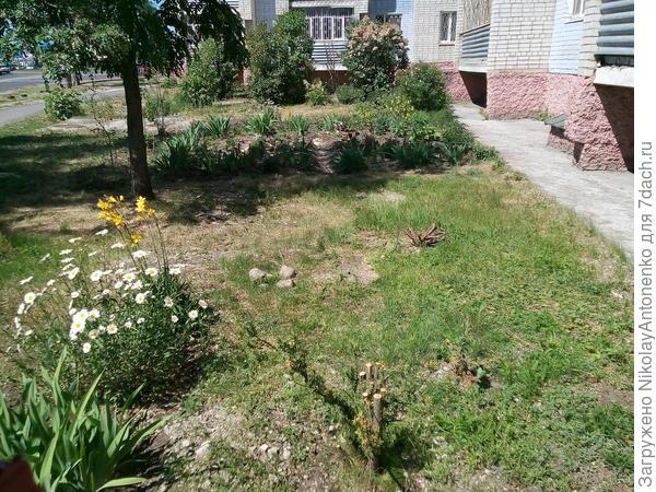газон, примыкающая к дому территория