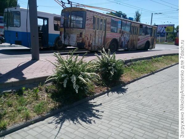остановка общественного транспорта, кусты спмреи