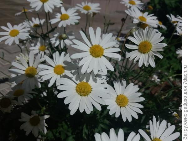 Разве не замечательный цветок:)
