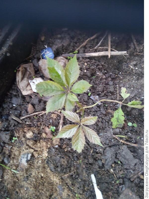 растение как называется?