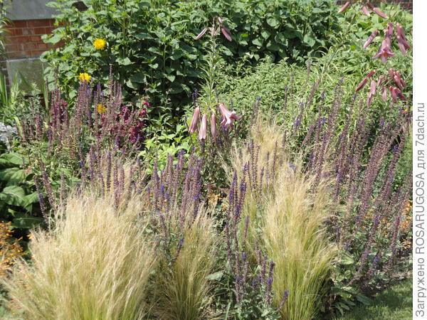 Мартагоны в цветнике природного стиля