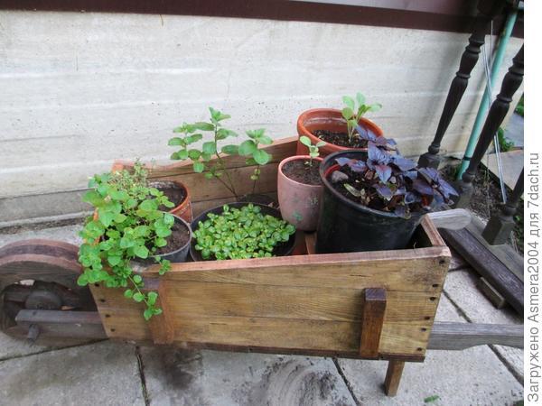 телега для зелени перед кухней