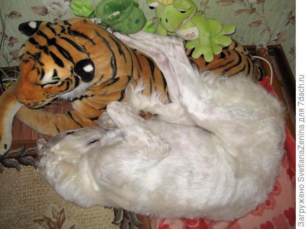 Спят усталые зверюшки, лапы кинув на игрушки )