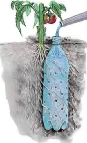 Капельный полив через пластиковую бутылку