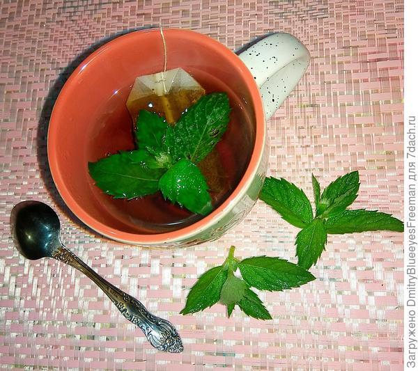 Чай с любимой мятой