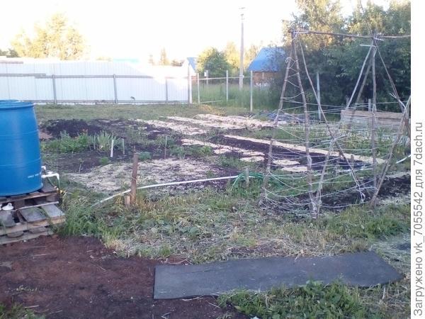 Как создать зелёную изгородь на глинистой почве? Какие растения использовать?
