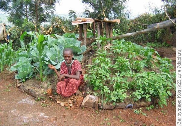 Высокие грядки в Африке :)...