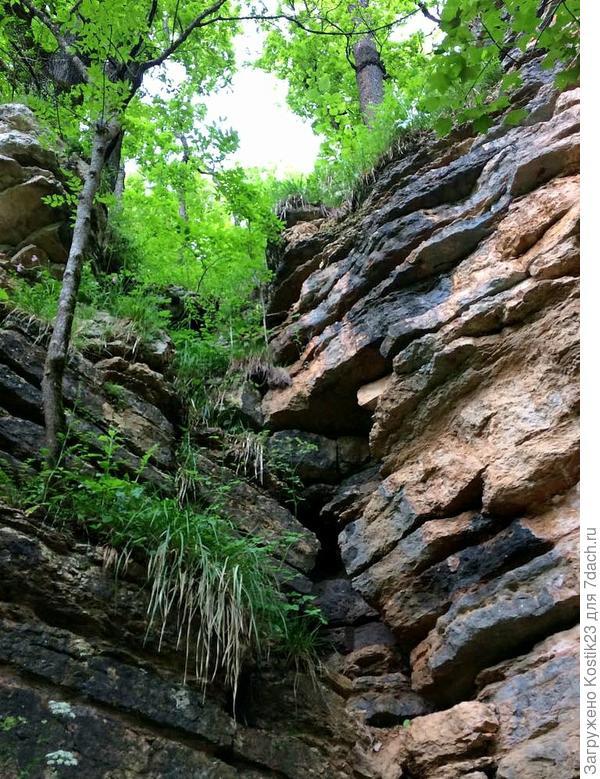 Деревья прям на скалах ростут...