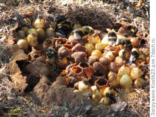 Само гнездо