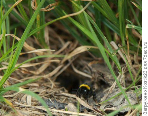 Вход в гнездо.