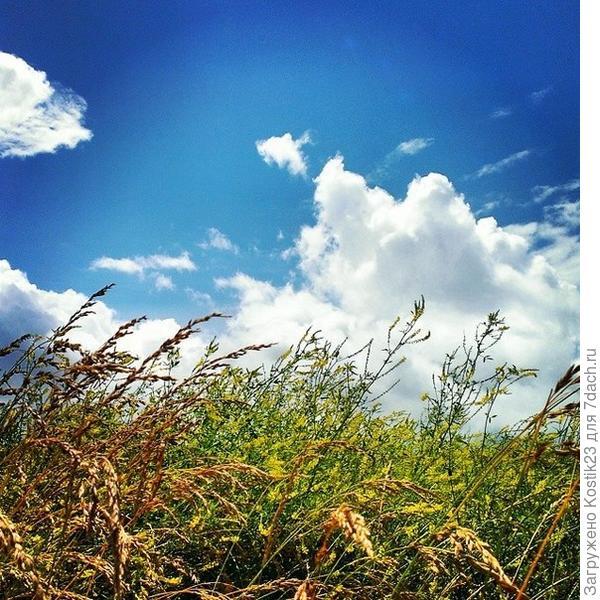Небо и дикоросы....