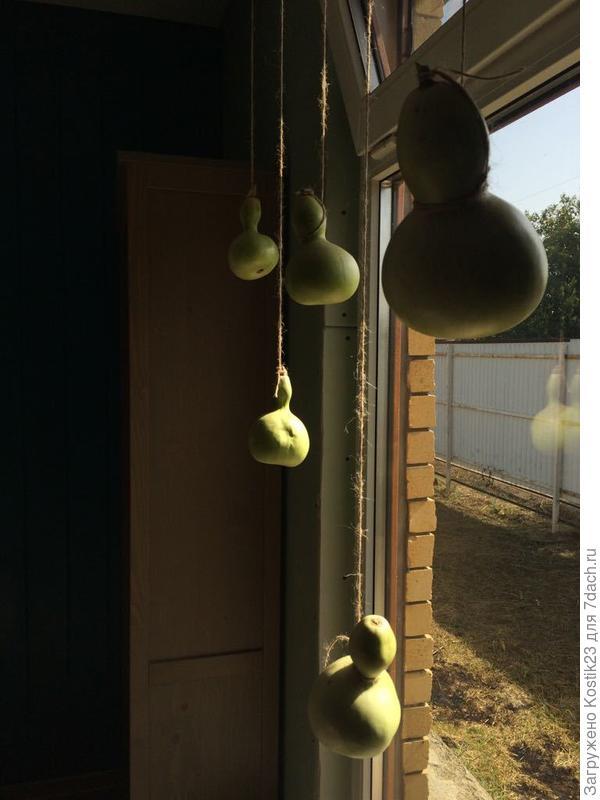 Декоративные тыквы ,висят греются :)