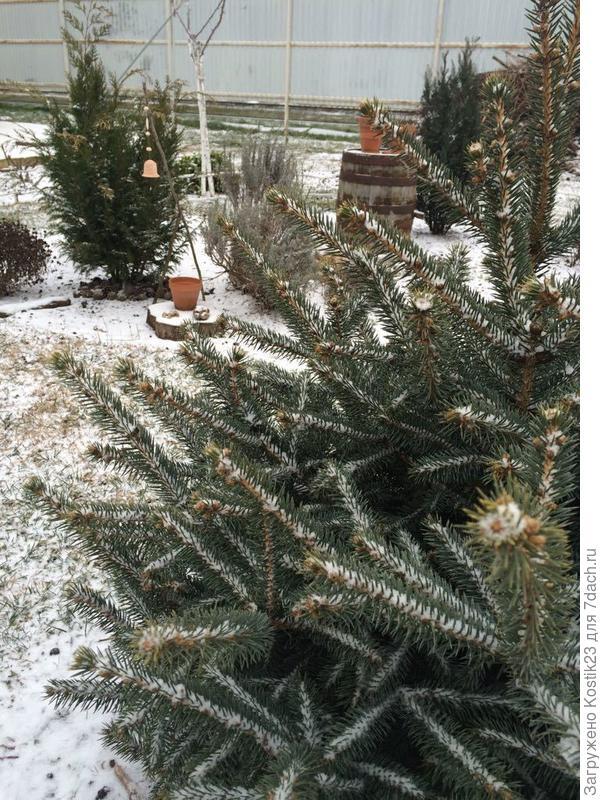Тихо-тихо падает мелкий снег... :)