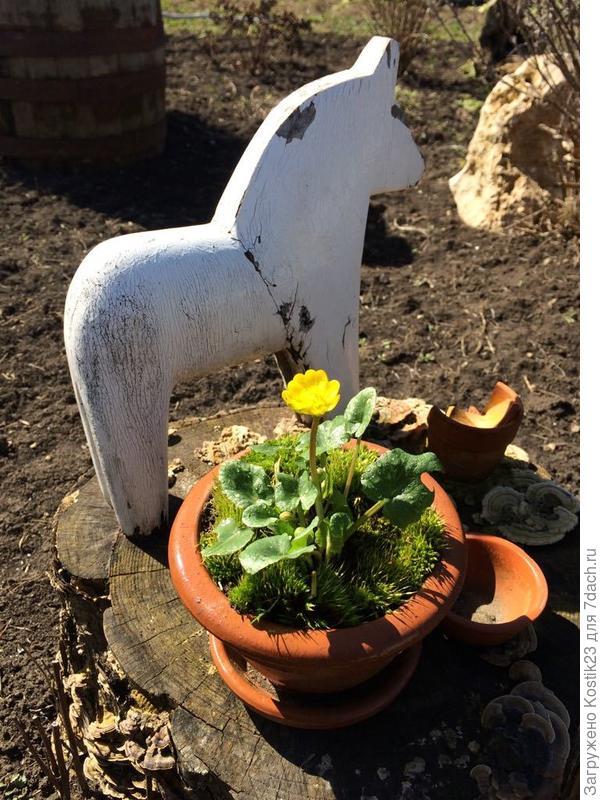 Калужница цветёт....