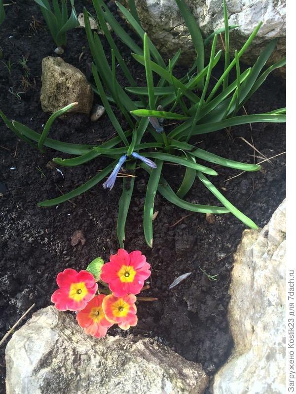 Первоцветы ... :)