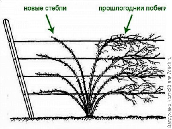 Фото из интернета