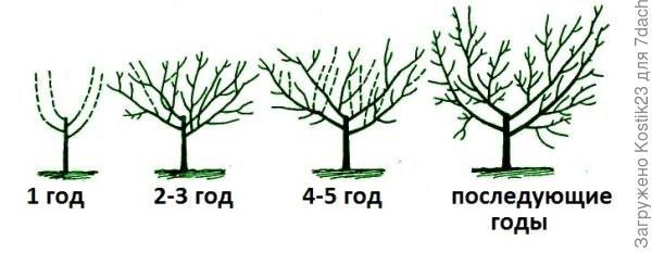 Фото из интернета ...