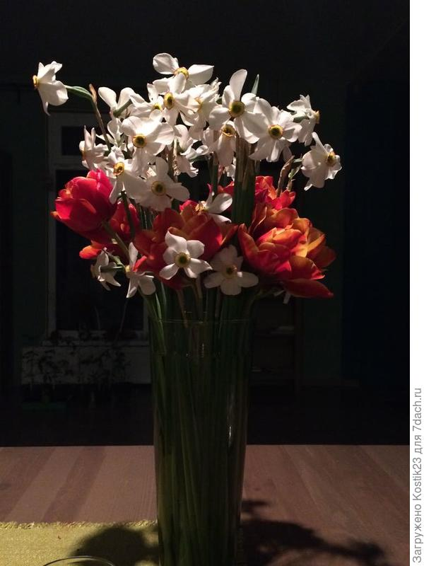 Поздние белые нарциссы и махровые тюльпаны ....:).