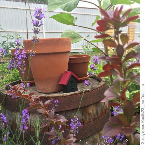 Мини домик в цветах лаванды и листьев барбарис:)