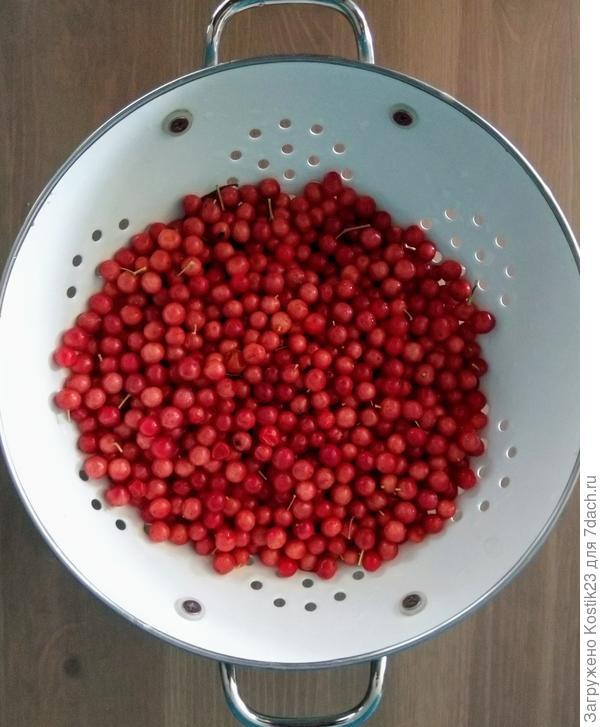 Помойте ягоды Калины...
