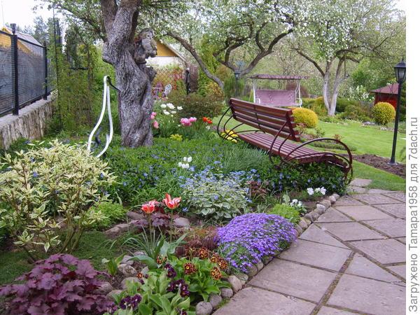 Барвинок под яблонями и многолетние цветы