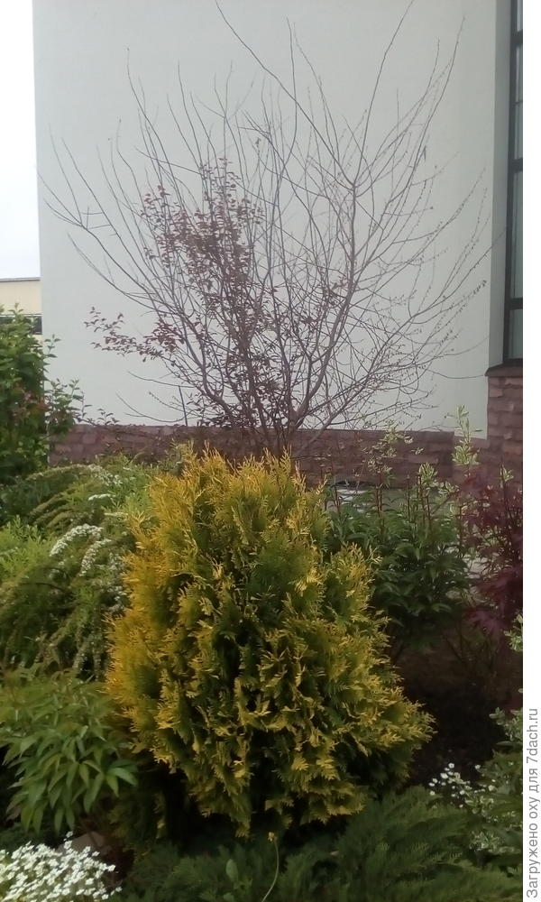 Дерево погибает помогите плз спасти!!!