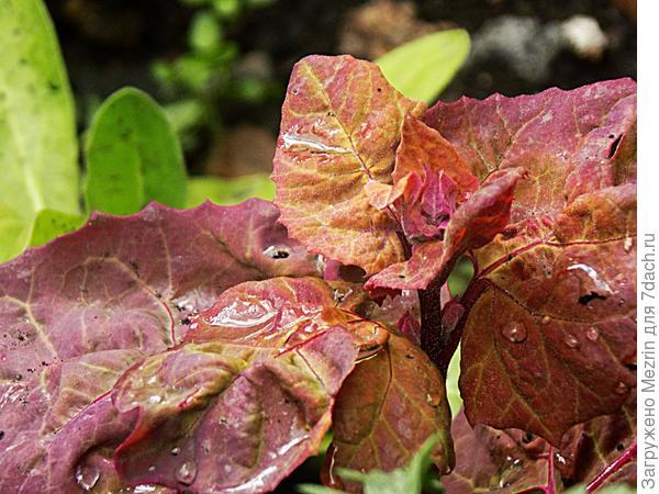 цветок после дождика