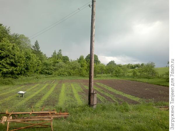 """...наш огородик после """"грозы в середине мая""""...)"""
