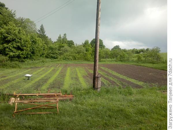 """...такой огород на момент конца весны,под посадку только левая часть,т.н. """"нижний огород"""")...правая,или """"верхний огород"""" в горчично-фацелиевом миксе будет аж до следующей весны..."""