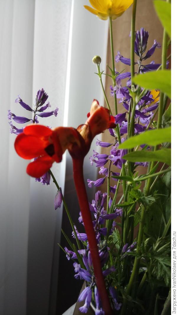 Принесли букет полевых цветов, среди которых оказался необычный красный цветок.  Под кладите кто знает его название