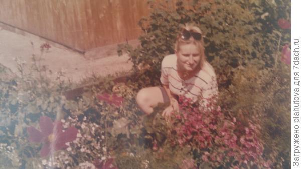 Вдоль дома росли кусты смородины.