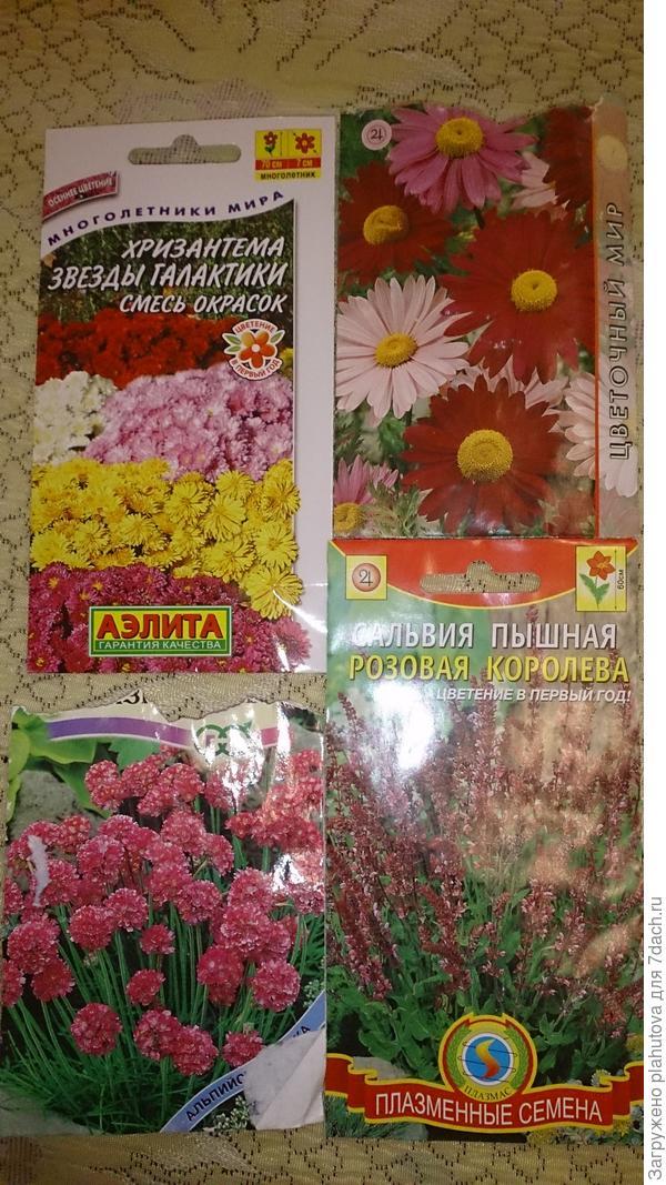 Хризантема и перитрум,  сальвия и армерия