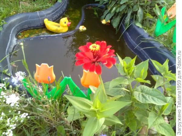 Наш пруд