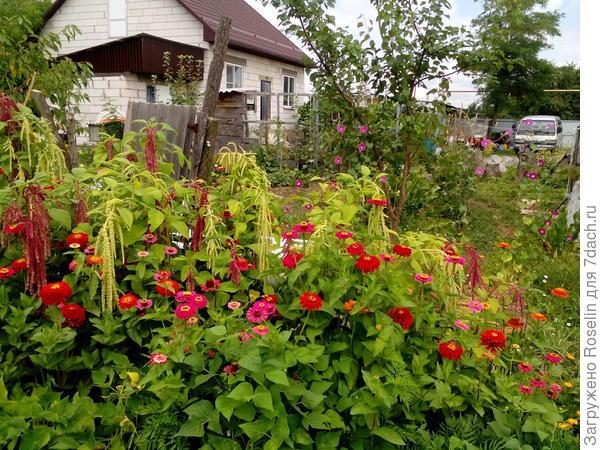 И в огороде нашлось место цветам