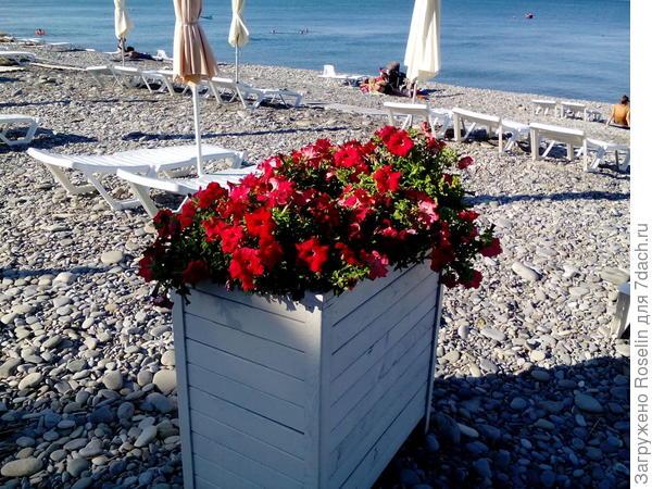Симпатичные клумбы на центральном пляже