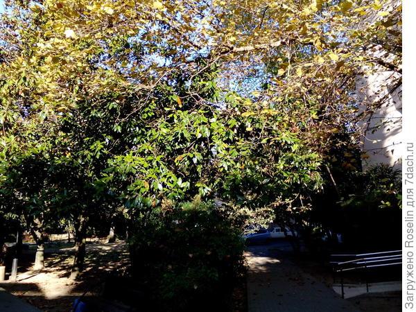 Август.Скоро осень,                                              Тишина, и листья Пропускают просинь Паутины чистой...