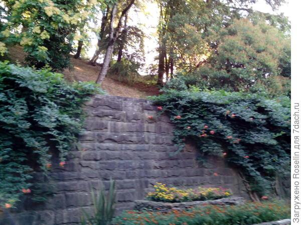 Опорные стены увиты лианами