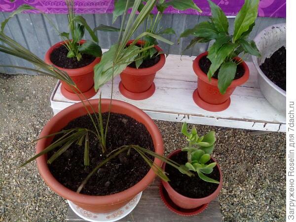 Работа закончена! Теперь буду наблюдать,как часто потребуется полив и как будут развиваться растения в грунте с гидрогелем.