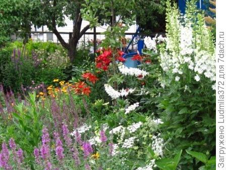 Наш сад в июне