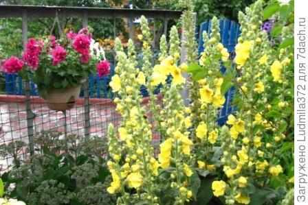 Цветы у ограды сада