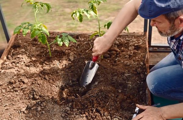 Рекомендованное количество растений на метр квадратный предполагает общую площадь, то есть площадь грядки и прохода