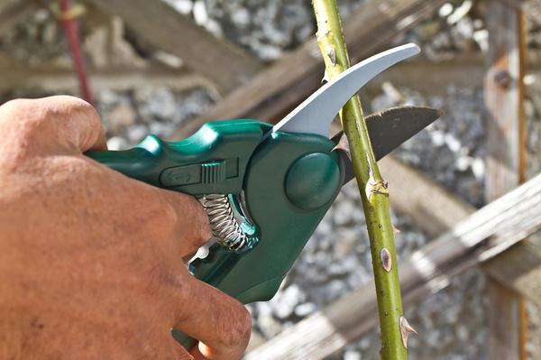 Фотография-загадка: что не так делает садовод?