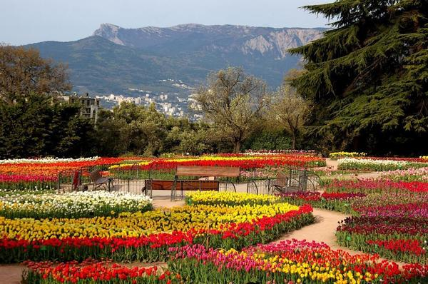 11-й Парад тюльпанов в Крыму, фото автора
