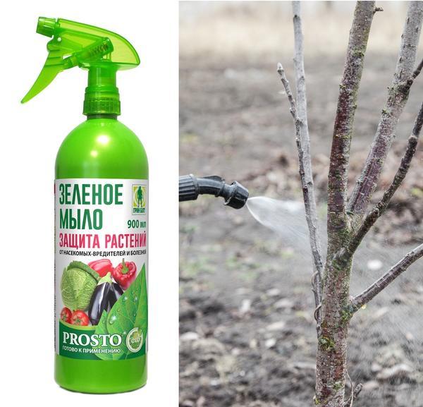 Зелёное мыло - хорошее средство против тли и других вредителей